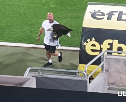 The Ludogorets eagle